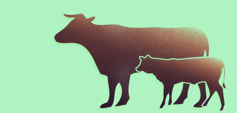 Logo Kigle mit grünem Hintergrund, groß